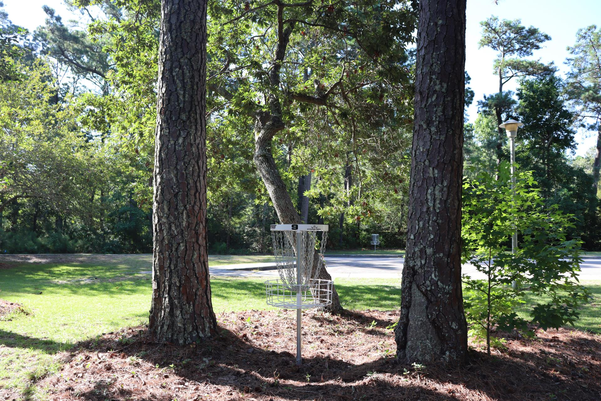The basket at Hole 9 tucked between two trees at Ace Run.